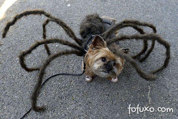 Cachorros e gatos também comemoram o Halloween - Foto 3