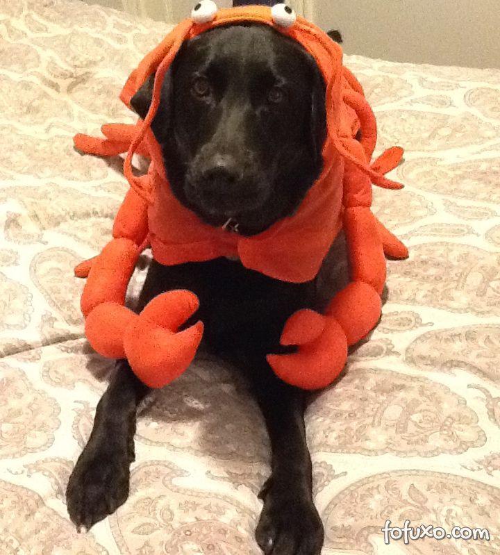 Cachorros e gatos também comemoram o Halloween - Foto 7