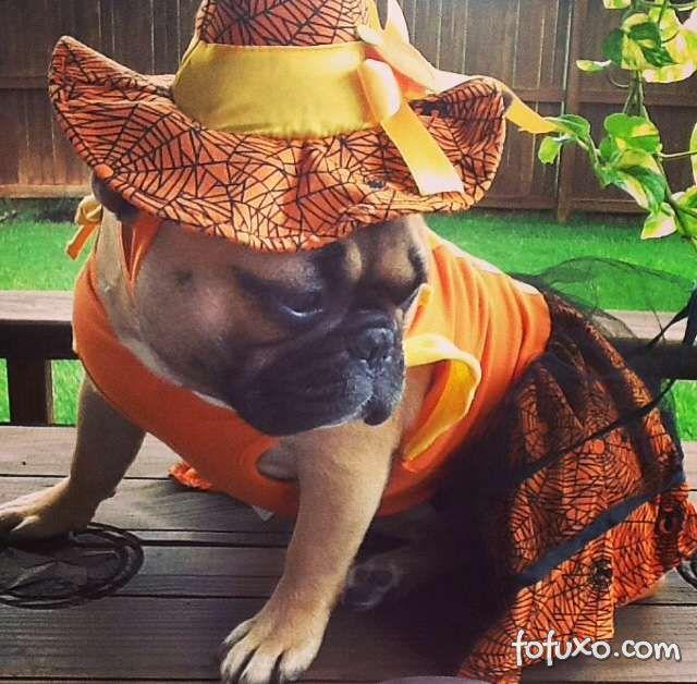 Cachorros e gatos também comemoram o Halloween - Foto 8