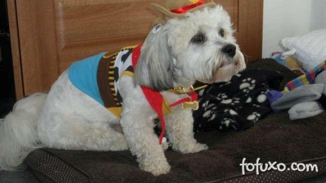 Cachorros e gatos também comemoram o Halloween - Foto 9