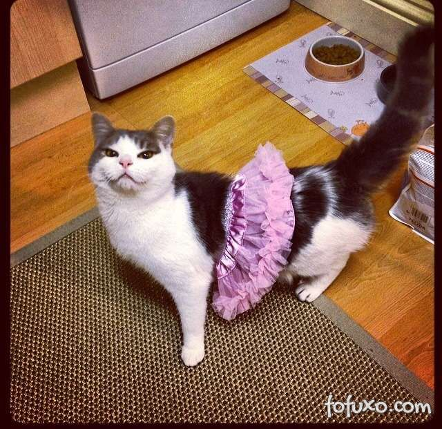 Cachorros e gatos também comemoram o Halloween - Foto 10