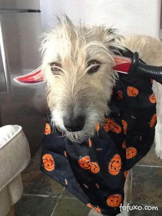 Cachorros e gatos também comemoram o Halloween - Foto 11