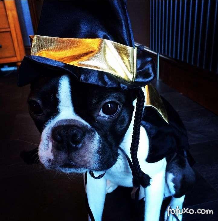 Cachorros e gatos também comemoram o Halloween - Foto 12