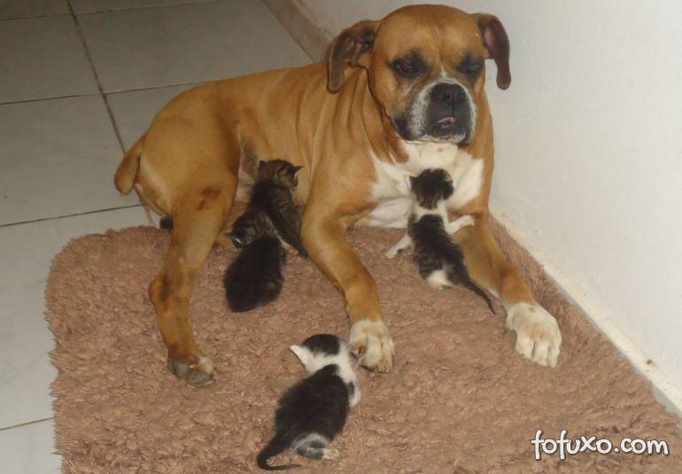 Filhotes de gatos são resgatados por cachorro em terreno baldio