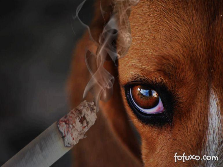 Cuidado com o cigarro perto do seu cão