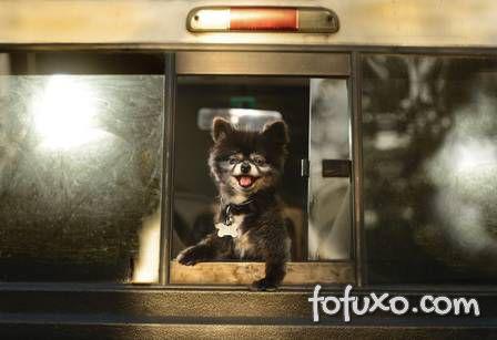 Ensaio mostra cães com a cabeça para fora do carro - Foto 1
