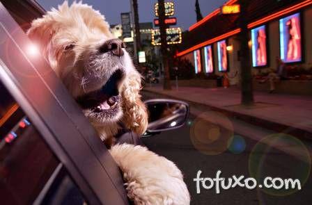 Ensaio mostra cães com a cabeça para fora do carro - Foto 2