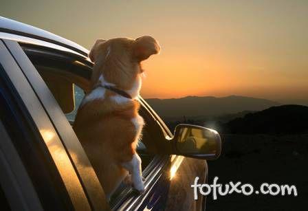 Ensaio mostra cães com a cabeça para fora do carro - Foto 3