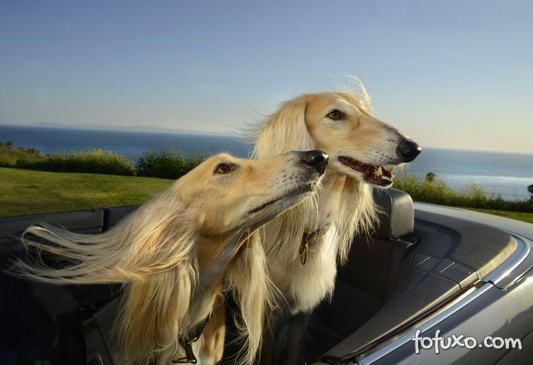 Ensaio mostra cães com a cabeça para fora do carro - Foto 4
