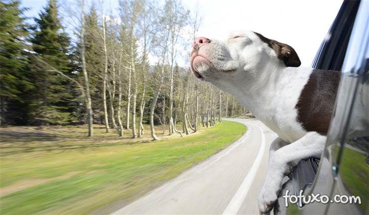 Ensaio mostra cães com a cabeça para fora do carro - Foto 6