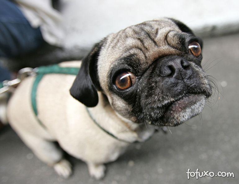 Confira dicas para diminuir a flatulência de cães
