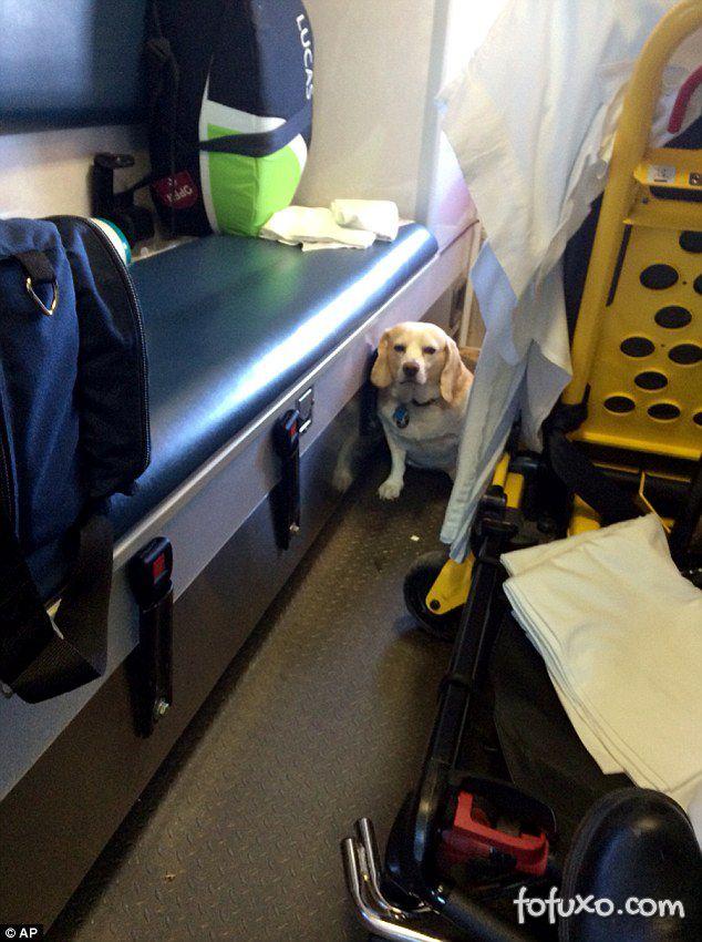 Cachorro insiste e consegue acompanhar dono dentro de ambulância