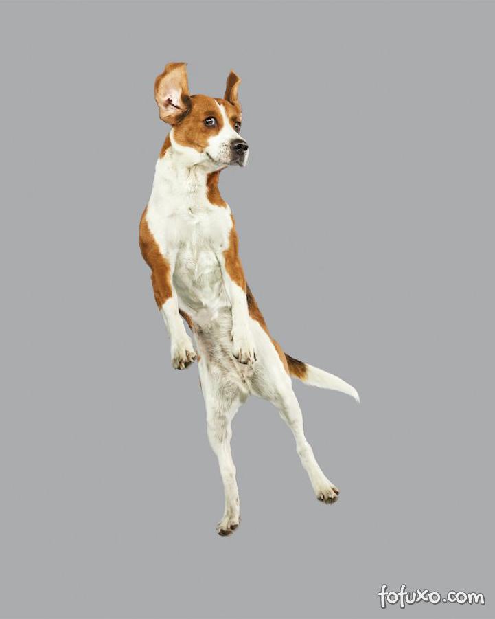 Fotógrafa cria ensaios com cães voadores - Foto 1