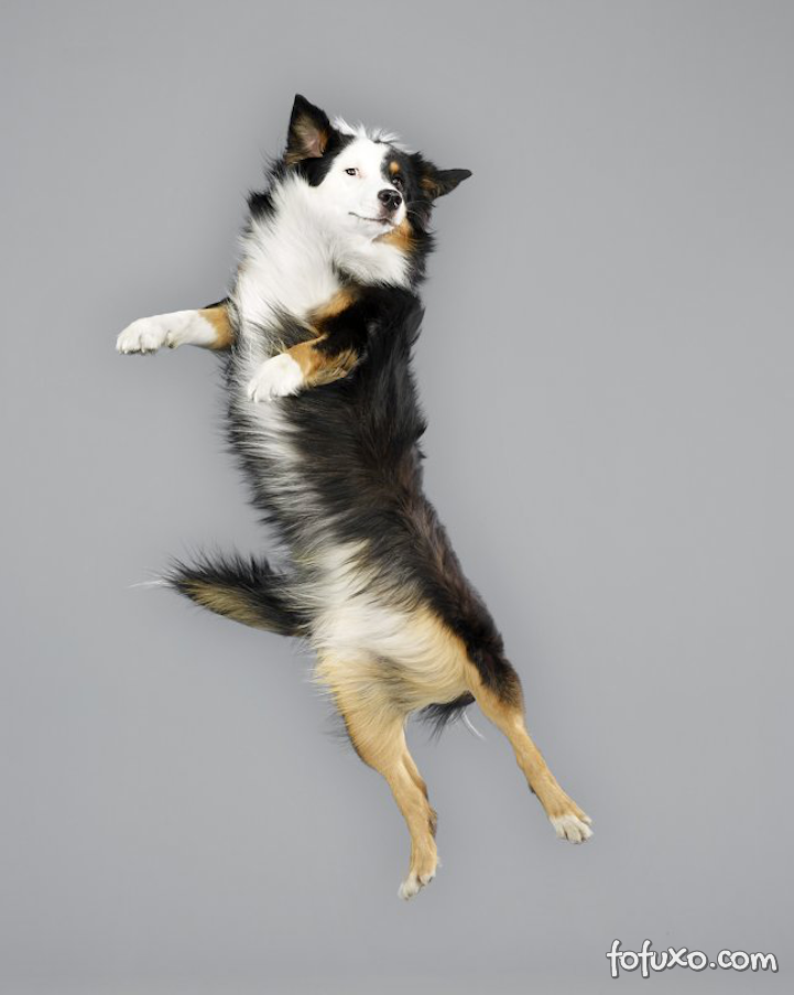 Fotógrafa cria ensaios com cães voadores - Foto 2
