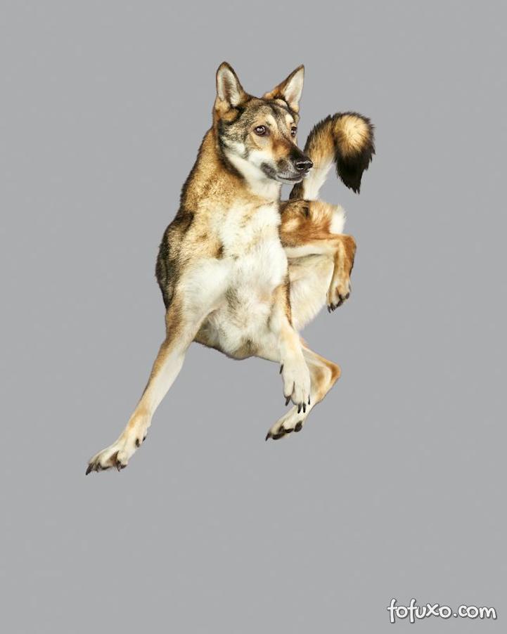 Fotógrafa cria ensaios com cães voadores - Foto 3