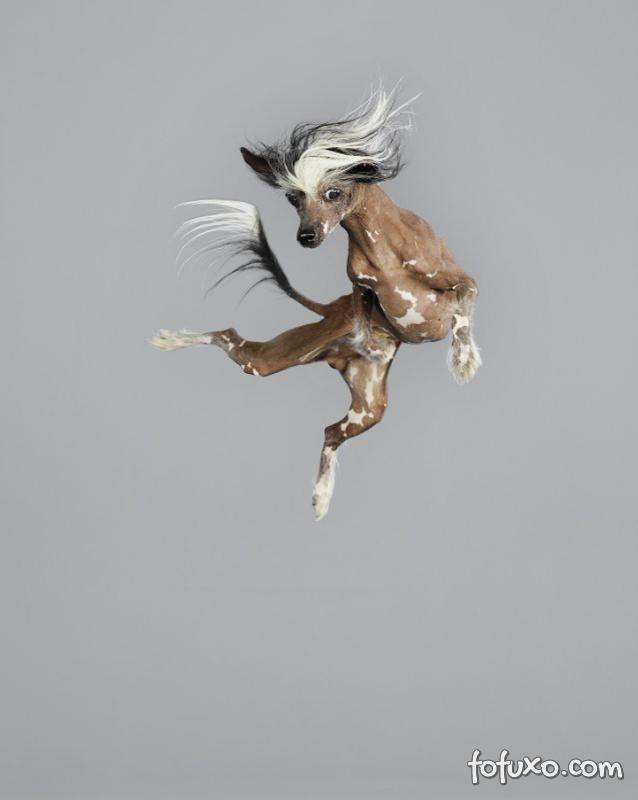 Fotógrafa cria ensaios com cães voadores - Foto 4