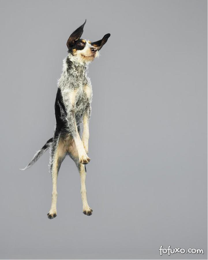 Fotógrafa cria ensaios com cães voadores - Foto 5