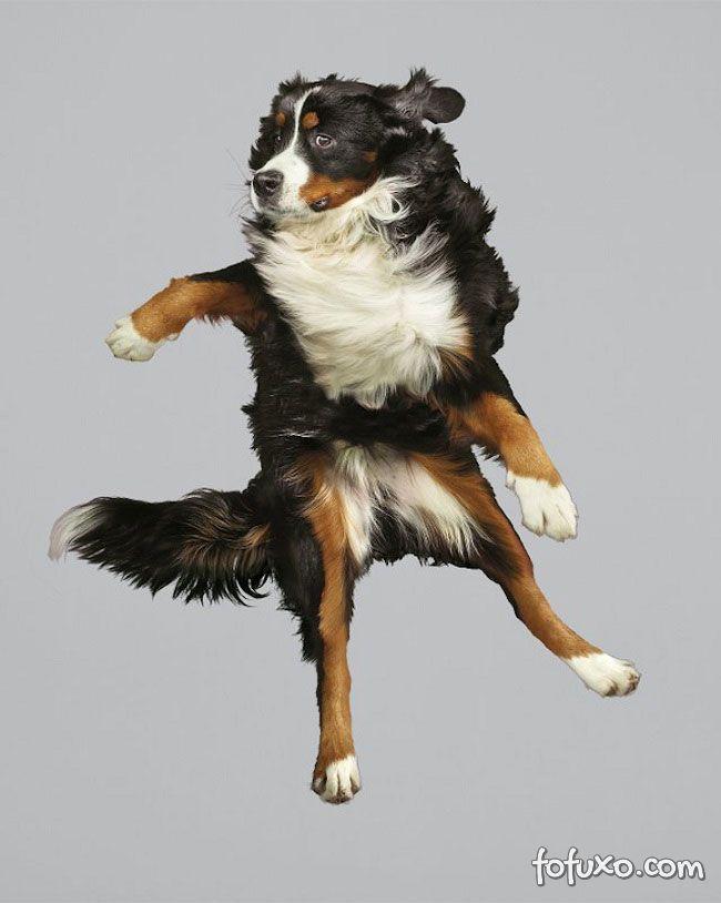 Fotógrafa cria ensaios com cães voadores - Foto 6