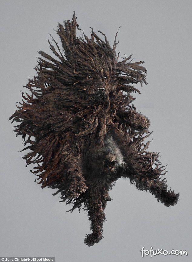 Fotógrafa cria ensaios com cães voadores - Foto 7