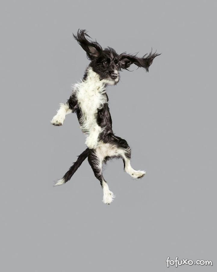 Fotógrafa cria ensaios com cães voadores - Foto 8