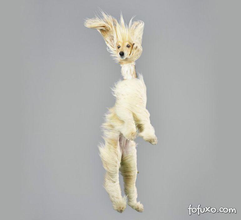 Fotógrafa cria ensaios com cães voadores - Foto 9
