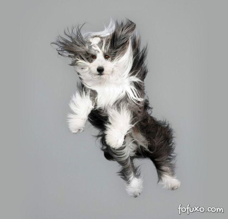Fotógrafa cria ensaios com cães voadores - Foto 10