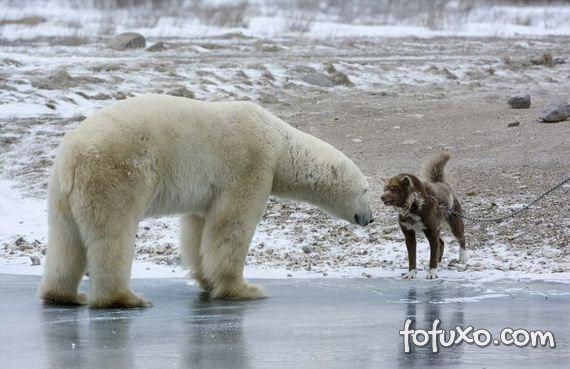 Fotógrafo flagra cão enfrentando urso - Foto 1