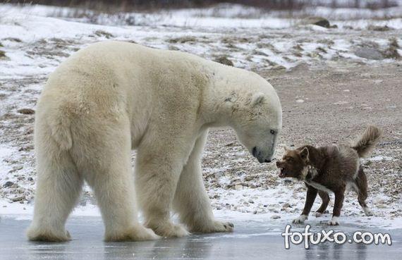 Fotógrafo flagra cão enfrentando urso - Foto 2