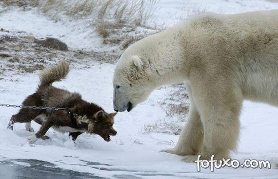 Fotógrafo flagra cão enfrentando urso - Foto 3