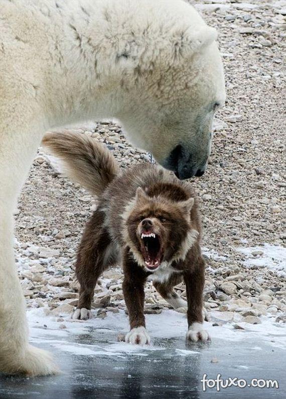 Fotógrafo flagra cão enfrentando urso - Foto 4