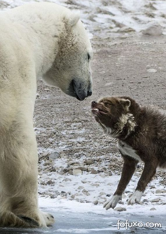 Fotógrafo flagra cão enfrentando urso - Foto 5