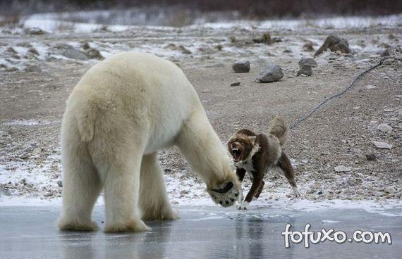 Fotógrafo flagra cão enfrentando urso - Foto 6