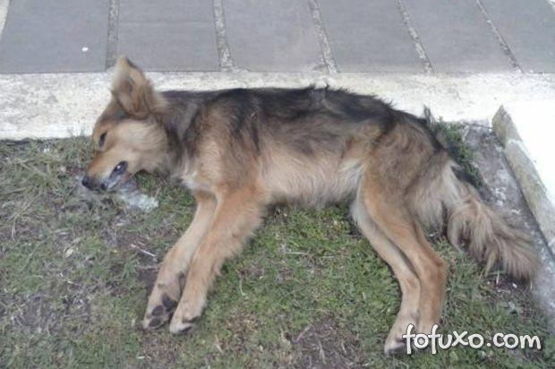 Moradores de cidade do interior do RS se mobilizam contra matança de cães e gatos