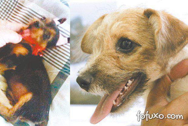Bandidos usam tinta em cães vira-latas e vendem como cães de raça