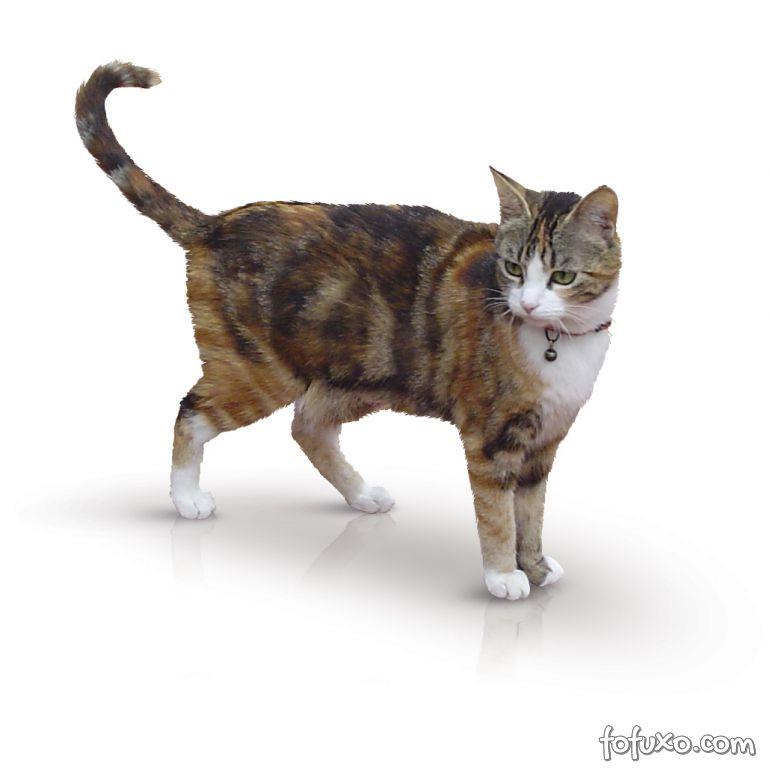 Rabos de gatos podem quebrar. Confira como evitar o problema