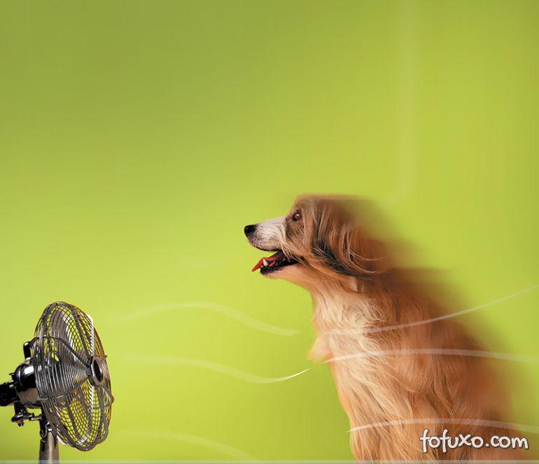 Saiba o que é a Hipertermia e os problemas que ela causa nos cães