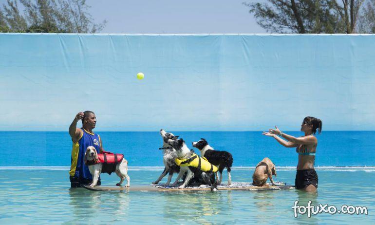 Está calor? Leve o seu cão para o parque aquático