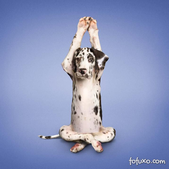 Empresários norte-americanos investem em academias para cães nos EUA