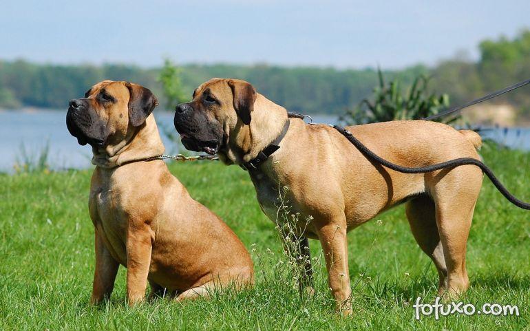 Clube Canil Americano reconhece mais quatro raças de cães