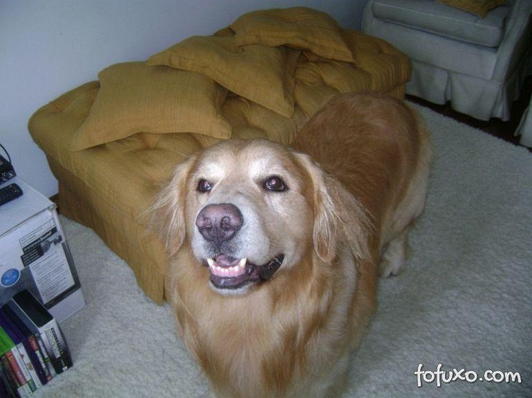 Novos estudos comprovam que cães entendem o que os donos dizem