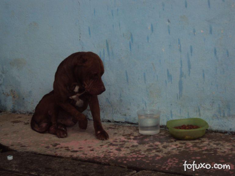 Campanha pede para pessoas colocarem potes com água nas ruas para os cães e gatos