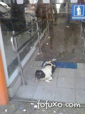 Cachorro é resgatado por moradores depois de ficar preso em agência bancária