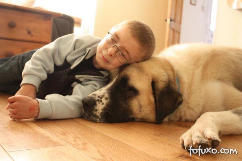 Pesquisas afirmam que cães ajudam no tratamento de crianças com autismo