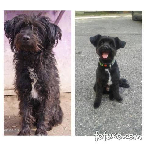 Confira imagens do antes e depois dos cães tirados das ruas - Foto 1
