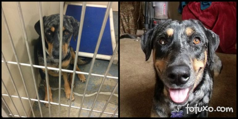 Confira imagens do antes e depois dos cães tirados das ruas - Foto 3