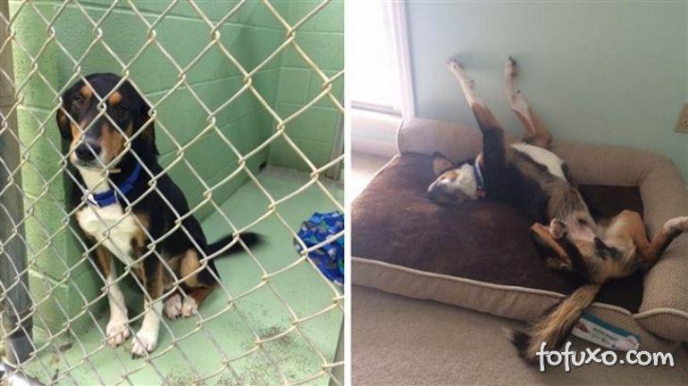 Confira imagens do antes e depois dos cães tirados das ruas - Foto 4