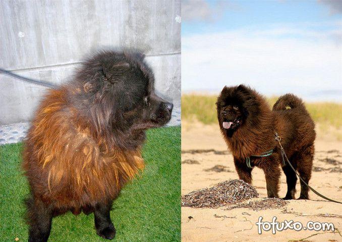 Confira imagens do antes e depois dos cães tirados das ruas - Foto 5
