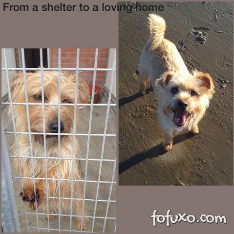 Confira imagens do antes e depois dos cães tirados das ruas - Foto 6