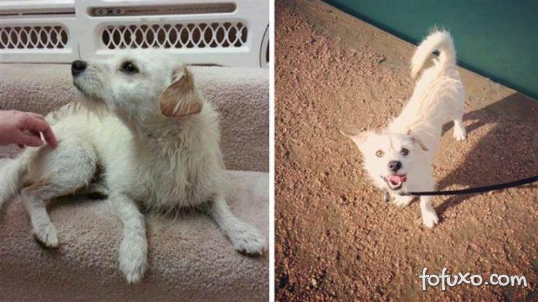 Confira imagens do antes e depois dos cães tirados das ruas - Foto 7