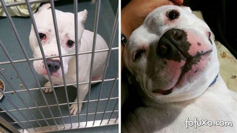 Confira imagens do antes e depois dos cães tirados das ruas - Foto 8
